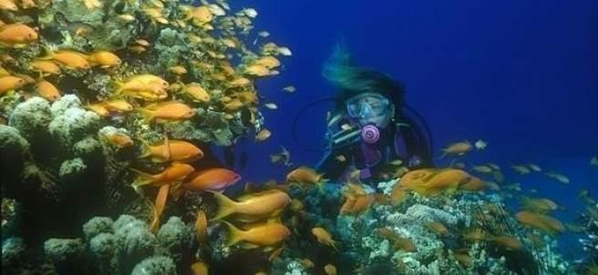 Fondo marino en La Herradura