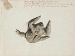 ¿Qué animales vio uno de los primeros pintores europeos que viajó a Brasil?