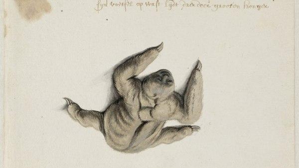 'Sloth', 1638–1643