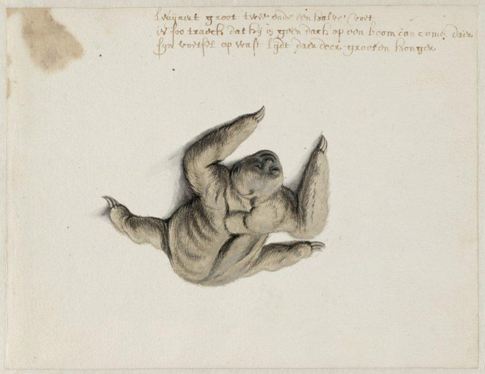 Fotos: Frans Post, pintor en Brasil en el siglo XVII   Imágenes