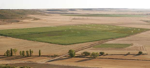 Tierras de cultivos de Castilla y León