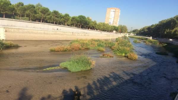 Rescatado un hombre tras caer al río Manzanares
