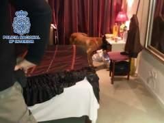 torbe con prostitutas videos de prostitutas en españa