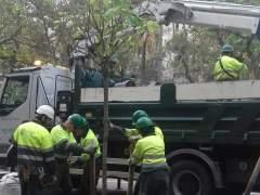 Barcelona reposarà 2.600 arbres i tornarà a plantar palmeres