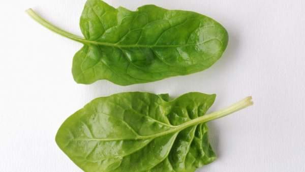 Fotos hojas de espinacas