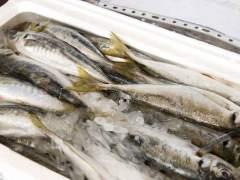 Los españoles tiran 23 millones de kilos de pescado al año