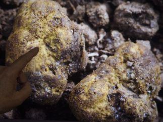 Nuevo género de hongos en Zamora