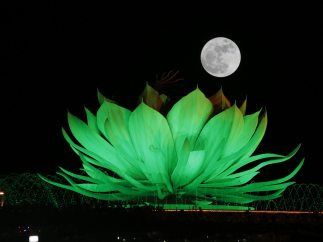 Una flor junto a la luna