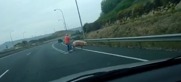 Un hombre corre tras un cerdo en la autovía
