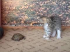 Tortuga y gato