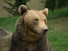 Un oso debuta como artista en una galería finlandesa