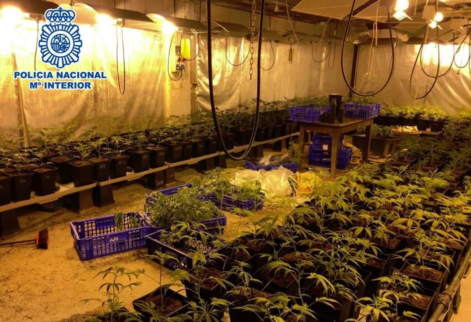 Once detenidos en una operaci n contra plantaciones de marihuana en la regi n - Plantaciones de marihuana interior ...