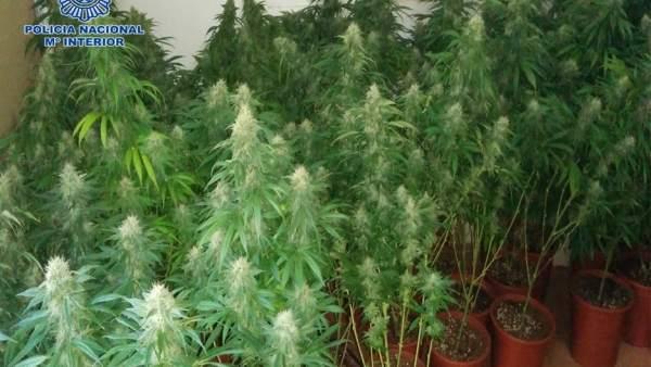 Marihuana encontrada en un furgón en Almería