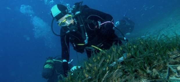 Un voluntario comprueba el estado de la posidonia oceánica