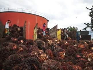 Una planta de tratamiento de aceite de palma en Indonesia