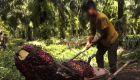 Aceite de palma: un cultivo con trabajo infantil forzoso