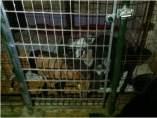 Las tres perras rescatadas