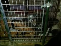 Rescatan a tres perras que mantenían encerradas en un trastero