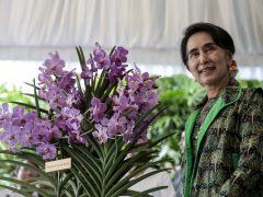 'Orquídea Aung San Suu Kyi'