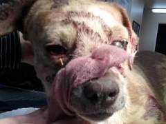 Condenado a cinco años por matar a un perro a golpes de pala