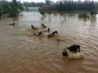 Caballos ahogándose