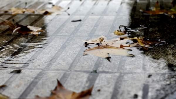 Hojas mojadas en el suelo.