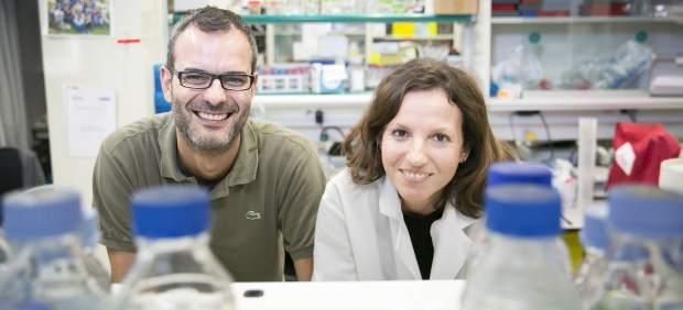 """Resultado de imagen de """"Células madre y cáncer"""" del IRB, Salvador Aznar Benitah"""