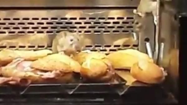 Graban ratas en una vitrina de una panadería de Madrid