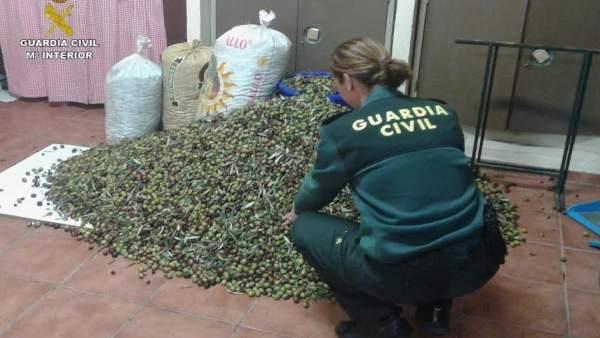 Recuperan 500 kilos de aceitunas robadas en Bonares.