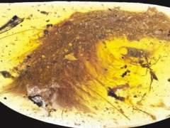 Hallado en Birmania el fósil de una cola de dinosaurio