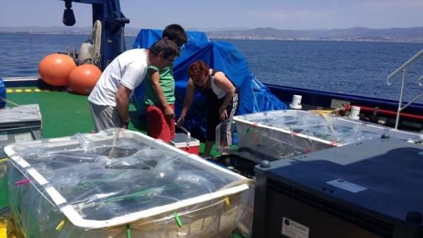 Trabajos en el marco del estudio sobre el Mediterráneo como 'sumidero' de CO2