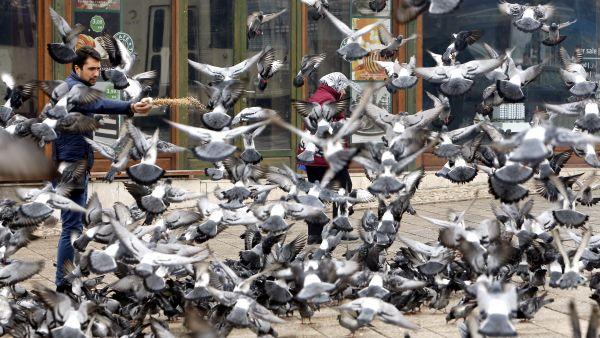 Concentración de palomas