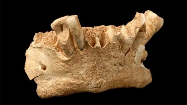 Mandíbula de Atapuerca