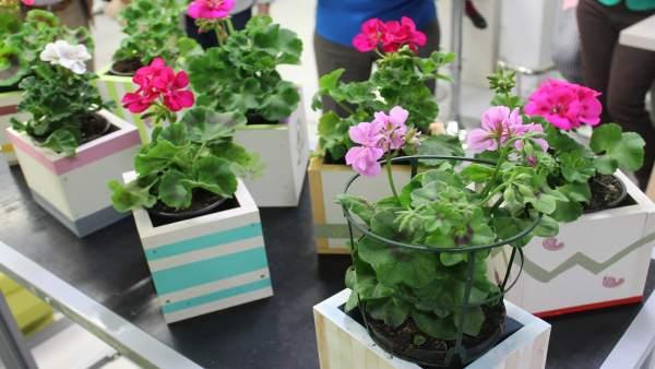 Macetas con flores para el día de tu casa.