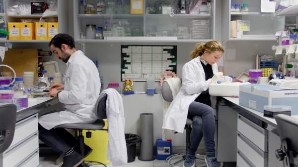 Proyecto internacional en el Laboratorio Cabimer