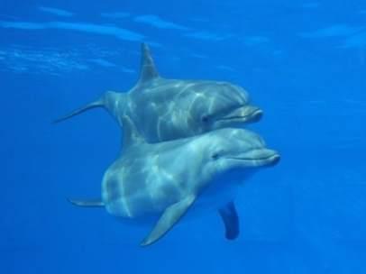 Delfines Del Zoo De Barcelona.