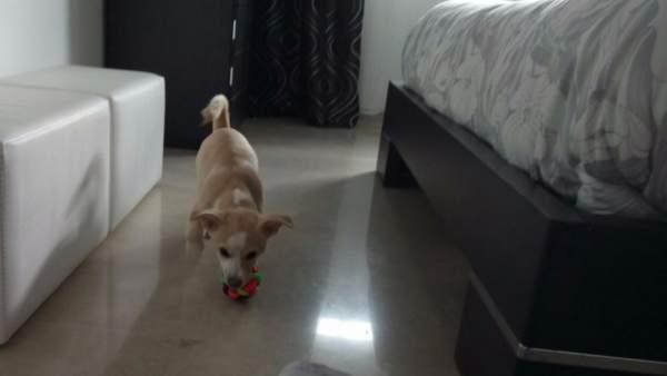 Un perro acogido por una familia de Alicante
