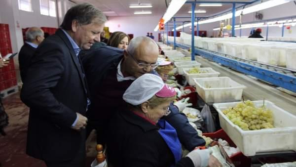 Juan Carlos Moragues visita la Cooperativa Agrícola Monforte del Cid