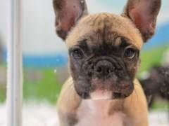 Animal, animales, perro, perros, cachorro, cachorros, perra, perras.
