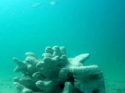 Coral impreso