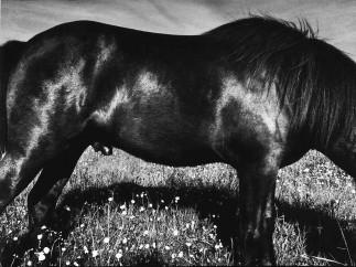 Anders Petersen: Close Distance. 2002
