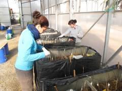Una planta piloto de la UPCT con humedales artificiales