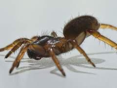 Constatan en bebés signos relacionados con el miedo a arañas y serpientes