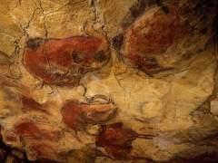 La cueva de Altamira podría cerrar el acceso de visitas