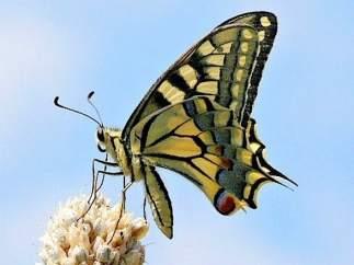 Exposición 'Mariposas de arcoíris' en la Biblioteca Ibercaja José Sinués