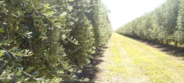 Vista de olivar