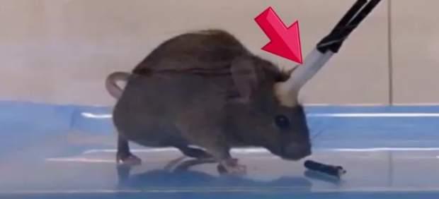 Experimento con ratones