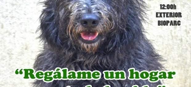 15 De Enero, Fecha Para El Desfile Solidario De Perros De Aupa Y Bioparc Valenci