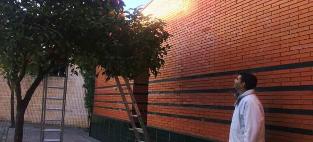 Recogida de naranjas municipal