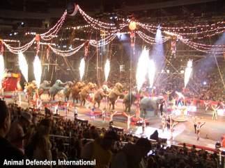 Los defensores de los animales celebran el cierre del circo itinerante más viejo del mundo